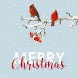 圣诞快乐卡片-冬天鸟用花楸浆果 免版税库存照片