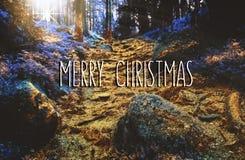 圣诞快乐在被迷惑的金黄森林里 库存图片