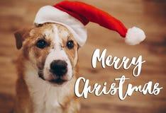 圣诞快乐文本,季节性贺卡标志 在圣诞老人的狗 免版税图库摄影