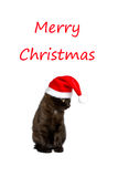 圣诞快乐滑稽猫的帽子 免版税库存照片
