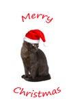圣诞快乐滑稽猫的盖帽 免版税库存图片