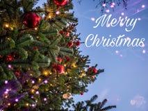 圣诞树与与chrismas文本结婚 免版税图库摄影