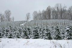 圣诞树乳白天空 免版税图库摄影