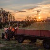 圣诞树农场 库存照片