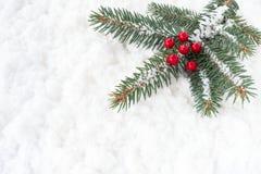 圣诞树冷杉枝杈用在雪的霍莉莓果 免版税库存照片