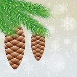 圣诞树分支与锥体的 库存照片