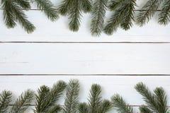 圣诞树分支框架背景 免版税库存图片