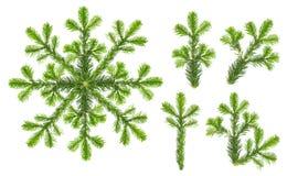 圣诞树分支雪花白色背景集合 库存照片