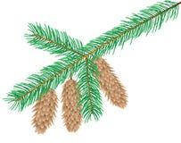 圣诞树分支 免版税库存图片