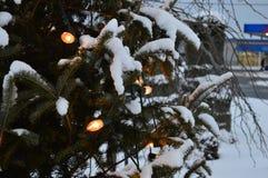 圣诞树和光、冷杉和雪 免版税库存照片