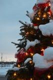 圣诞树和光、冷杉和雪 库存照片