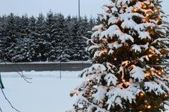 圣诞树和光、冷杉和雪 免版税库存图片