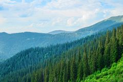 圣诞树在山的背景中环境美化 免版税库存照片
