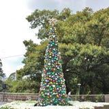 圣诞树在悉尼 库存照片