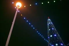 圣诞树在晚上 库存照片