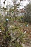 圣诞树在森林里 库存图片