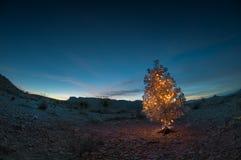 圣诞树在沙漠 库存图片