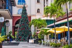 圣诞树在热带-毛里求斯 库存照片