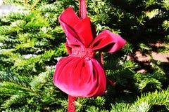 圣诞树在特雷维索,意大利,葡萄酒颜色 免版税库存图片