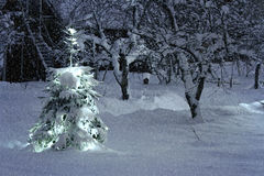 圣诞树外面在多雪的庭院里 库存照片