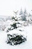 圣诞树家庭  图库摄影