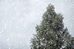 圣诞树杉木或冷杉与降雪在天空背景在冬天 免版税库存照片