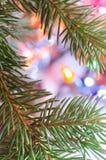 圣诞树枝杈 库存图片