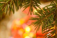 圣诞树枝杈 免版税库存照片