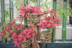 圣诞树模型红色 库存照片