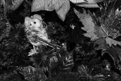 圣诞树特写镜头-细节 库存图片