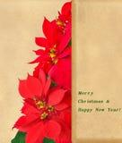 圣诞树由红色一品红花制成 图库摄影