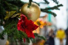 圣诞树的分支,装饰用金黄球和一朵红色花 免版税图库摄影