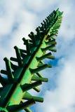 圣诞树的设施的框架反对天空蔚蓝的 库存图片