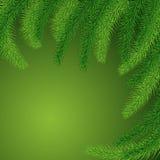 圣诞树的绿色多刺的分支背景  免版税图库摄影