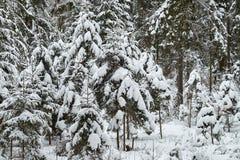 圣诞树美妙地是多雪的雪 免版税图库摄影