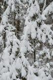圣诞树美妙地是多雪的雪 免版税库存图片