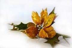 圣诞树装饰装饰品木兰 库存图片