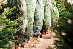 圣诞树购物的交易市场种植者12月 库存图片