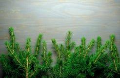 圣诞树边界 库存图片