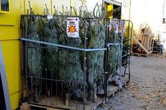 圣诞树销售 库存图片