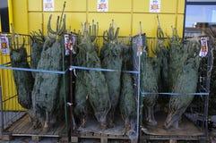 圣诞树销售 库存照片