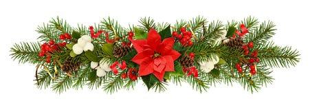 圣诞树,一品红花的莓果的常青枝杈 免版税库存图片