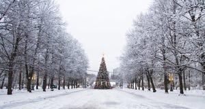 圣诞树,莫斯科 库存图片