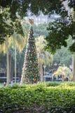 圣诞树:海德公园,悉尼 免版税图库摄影