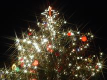 圣诞树 图库摄影