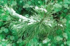 圣诞树bokeh背景 免版税库存图片