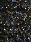 圣诞灯杉木 免版税库存图片