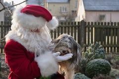 圣诞老人使用与狗 圣诞老人项目饲料狗 库存图片