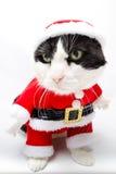 圣诞老人动物 免版税图库摄影