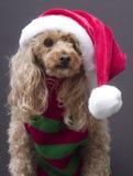 圣诞老人启发了狗 库存图片